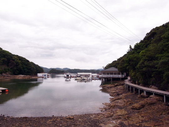 sasebo_trail_roots01