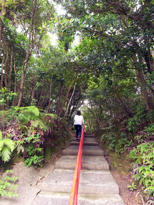 sasebo_trail_roots02