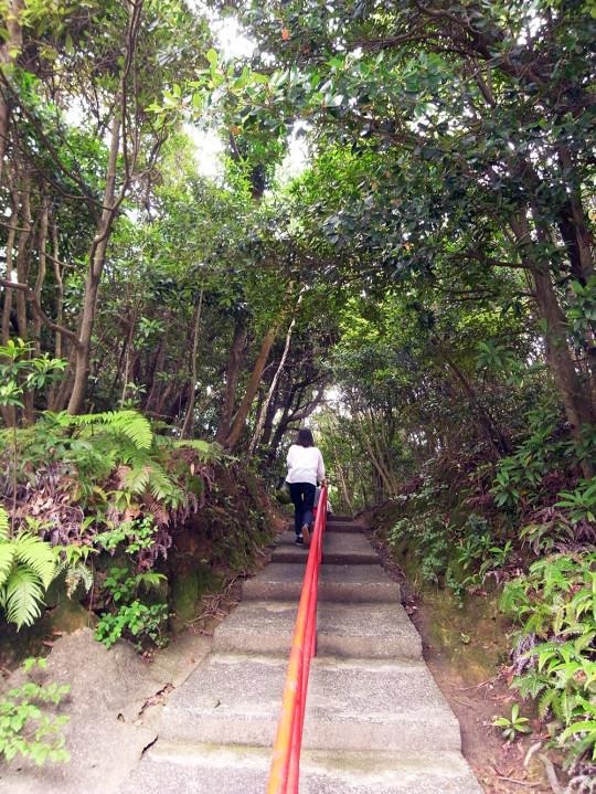sasebo_trail_roots02