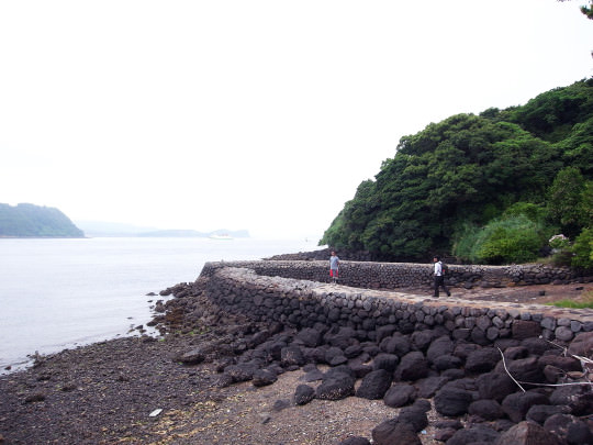 sasebo_trail_roots10