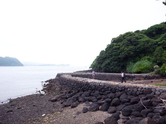 sasebo_trail_roots10