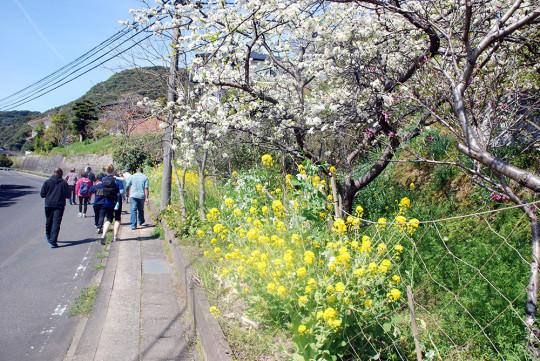 沿道を彩る四季の花々