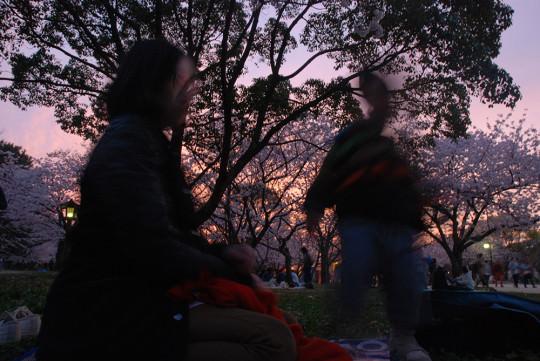 家族で花見 at 舞鶴公園